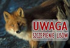 Akcja szczepienia lisów wolno żyjących przeciwko wściekliźnie w dn. 15-19.09.2018r.